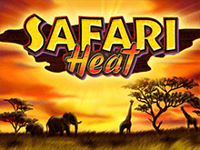 Safari Heat в казино онлайн
